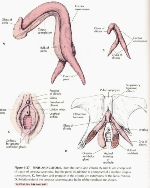 Images of your clitoris